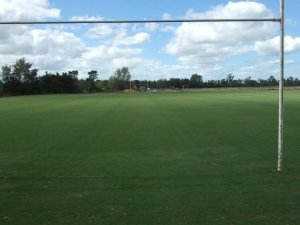 Rugby field turf